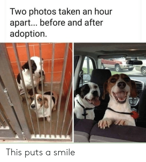 Taken, Smile, and Photos: Two photos taken an hour  apar... before and after  adoption This puts a smile