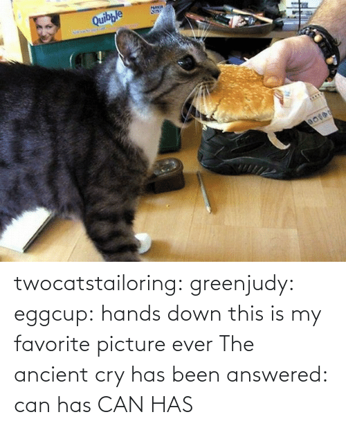 Is My Favorite: twocatstailoring:  greenjudy: eggcup: hands down this is my favorite picture ever The ancient cry has been answered: can has  CAN HAS