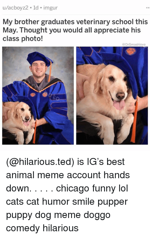 Animal Meme: u/acboyz2. ld. imgur  My brother graduates veterinary school this  class photo!  May.: Thought you would all appreciate his  @DrSmashlove (@hilarious.ted) is IG's best animal meme account hands down. . . . . chicago funny lol cats cat humor smile pupper puppy dog meme doggo comedy hilarious
