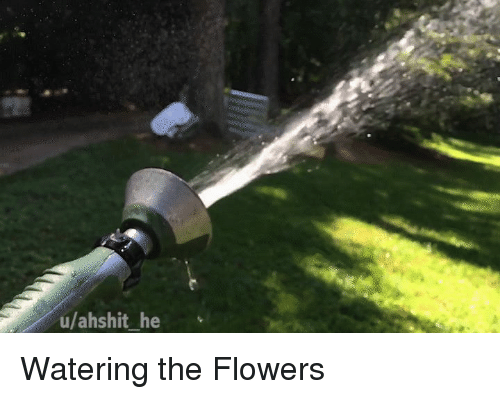 Flowers and The: u/ahshit_ he Watering the Flowers