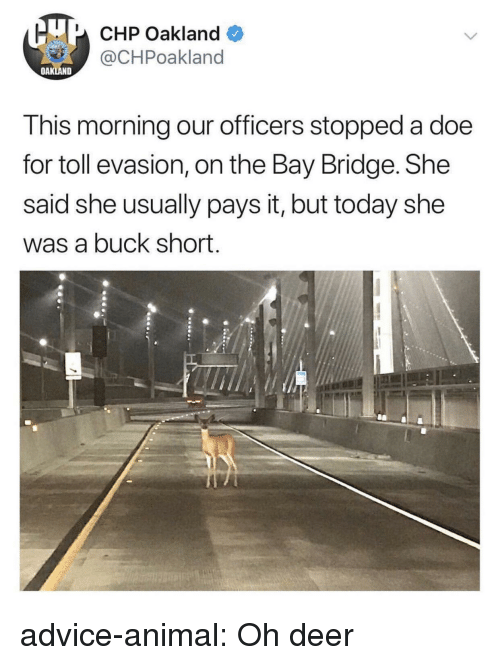 Advice, Deer, and Doe: U CHP Oakland  @CHPoakland  OAKLAND  This morning our officers stopped a doe  for toll evasion, on the Bay Bridge. She  said she usually pays it, but today she  was a buck short. advice-animal:  Oh deer