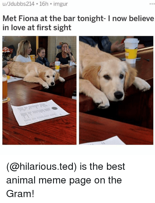 Love, Meme, and Memes: u/Jdubbs214 16h imgur  Rs  Met Fiona at the bar tonight- I now believe  in love at first sight (@hilarious.ted) is the best animal meme page on the Gram!