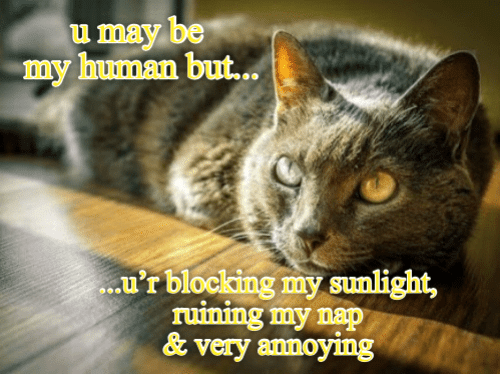 Blocking: u may be  my human but..  .u'r blocking my sunlight,  ruining my nap  &very annoying