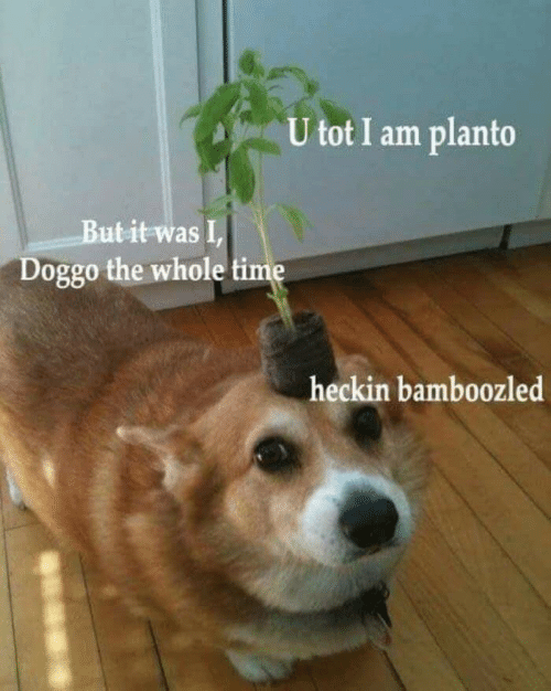 tot: U tot I am planto  But it was I,  Doggo the whole time  heckin bamboozled