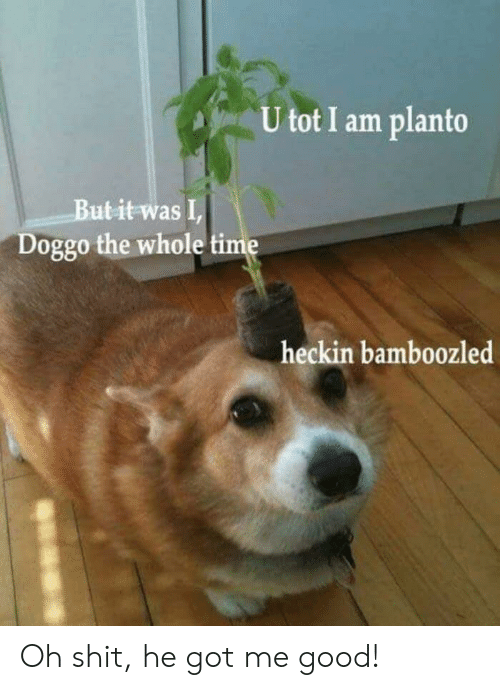 tot: U tot I am planto  Butit was I  Doggo the whole time  heckin bamboozled Oh shit, he got me good!