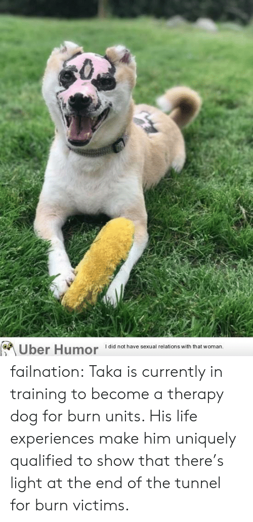 Experiences: Uber Humor  I did not have sexual relations with that woman.. failnation:  Taka is currently in training to become a therapy dog for burn units. His life experiences make him uniquely qualified to show that there's light at the end of the tunnel for burn victims.