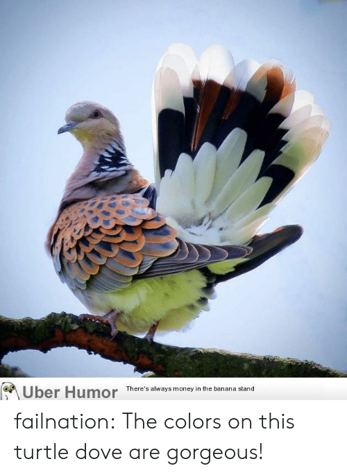 Dove: Uber Humor  There's always money in the banana stand failnation:  The colors on this turtle dove are gorgeous!