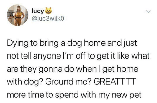 Funny, Tumblr, and Home: ucy  @luc3wilko  Dying to bring a dog home and just  not tell anyone I'm off to get it like what  are they gonna do when I get home  with dog? Ground me? GREATTTT  more time to spend with my new pet