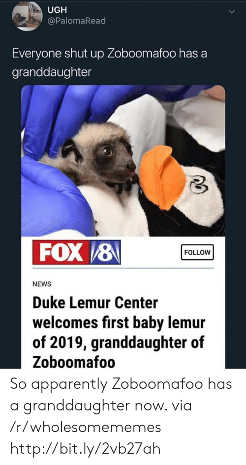 Apparently, News, and Shut Up: UGH  @PalomaRead  Everyone shut up Zoboomafoo has a  granddaughter  FOX /8  FOLLOW  NEWS  Duke Lemur Center  welcomes first baby lemur  of 2019, granddaughter of  Zoboomafoo So apparently Zoboomafoo has a granddaughter now. via /r/wholesomememes http://bit.ly/2vb27ah