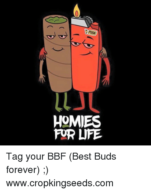 Homie, Memes, and 🤖: ULJU  HOMIES  FOR LIFE. Tag your BBF (Best Buds forever) ;)  www.cropkingseeds.com