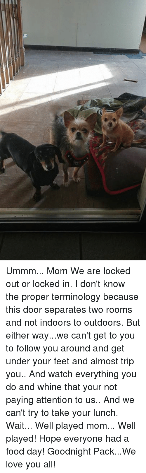 Memes, 🤖, and Feet: Ummm... Mom We are locked out or locked in. I don't know the proper terminology because this door separates two rooms and not indoors to outdoors. But either way...we can't get to you to follow you around and get under your feet and almost trip you.. And watch everything you do and whine that your not paying attention to us.. And we can't try to take your lunch.  Wait... Well played mom... Well played!  Hope everyone had a food day!  Goodnight Pack...We love you all!