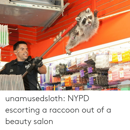 Tumblr, Blog, and Http: unamusedsloth: NYPD escorting a raccoon out of a beauty salon