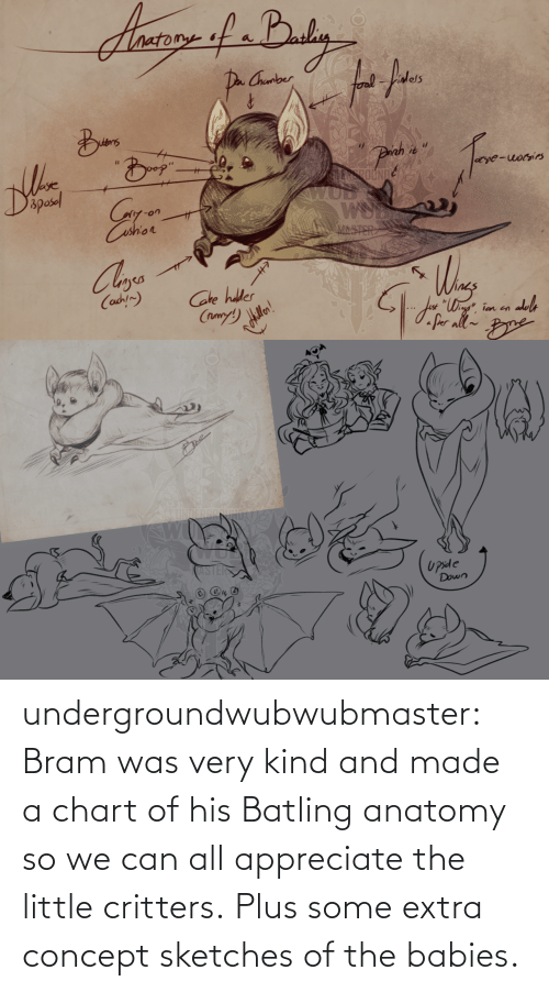 Tumblr, Appreciate, and Blog: undergroundwubwubmaster:  Bram was very kind and made a chart of his Batling anatomy so we can all appreciate the little critters. Plus some extra concept sketches of the babies.