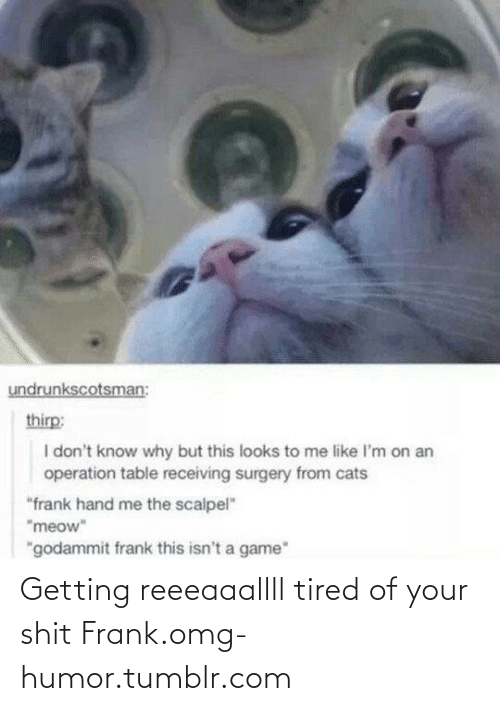 """Godammit: undrunkscotsman:  thirp:  I don't know why but this looks to me like I'm on an  operation table receiving surgery from cats  """"frank hand me the scalpel""""  """"meow""""  """"godammit frank this isn't a game"""" Getting reeeaaallll tired of your shit Frank.omg-humor.tumblr.com"""