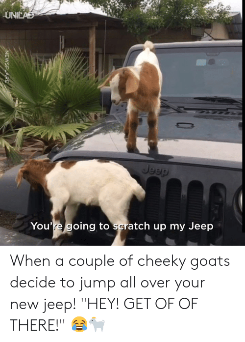 "Jeep: UNICAD  Jeep  You're going to scratch up my Jeep  NEWSFLARE When a couple of cheeky goats decide to jump all over your new jeep! ""HEY! GET OF OF THERE!"" 😂🐐"