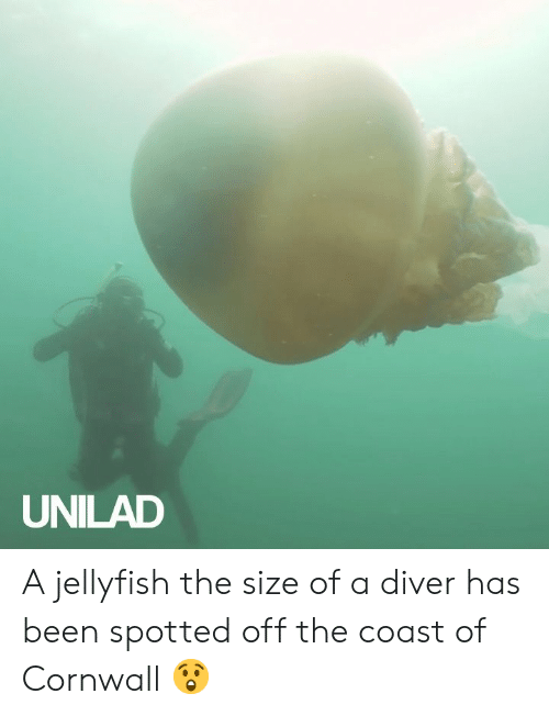 Dank, Been, and 🤖: UNILAD A jellyfish the size of a diver has been spotted off the coast of Cornwall 😲