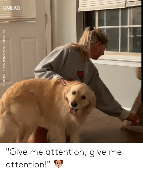 "unilad: UNILAD  ALEXANDRA STANEK VIA VIRALHOG ""Give me attention, give me attention!"" 🐶"