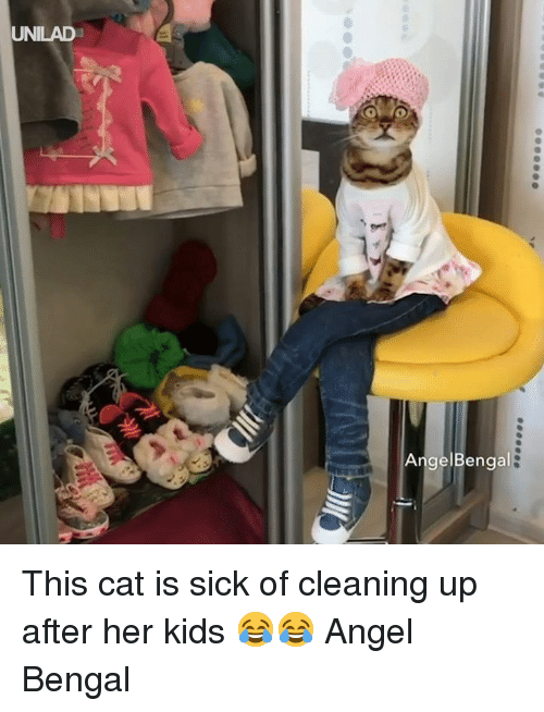 Dank, Angel, and Kids: UNILAD  AngelBengal This cat is sick of cleaning up after her kids 😂😂  Angel Bengal