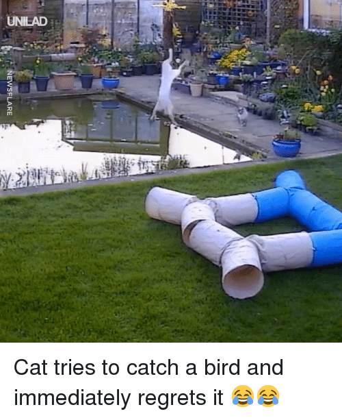 Dank, 🤖, and Cat: UNILAD Cat tries to catch a bird and immediately regrets it 😂😂