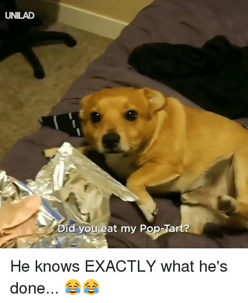 Dank, Pop, and 🤖: UNILAD  Did you eat my Pop-Tart? He knows EXACTLY what he's done... 😂😂