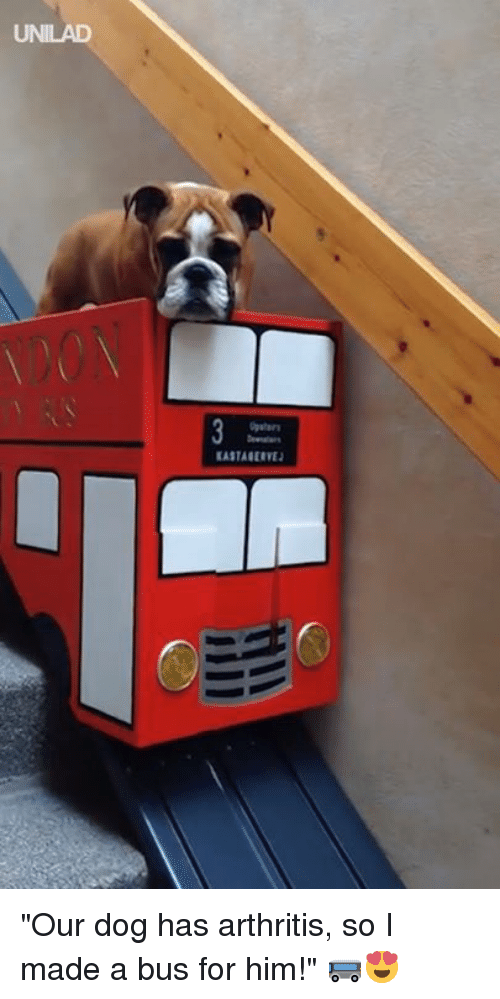 "Dank, Arthritis, and 🤖: UNILAD  EASTAGERVE ""Our dog has arthritis, so I made a bus for him!"" 🚌😍"