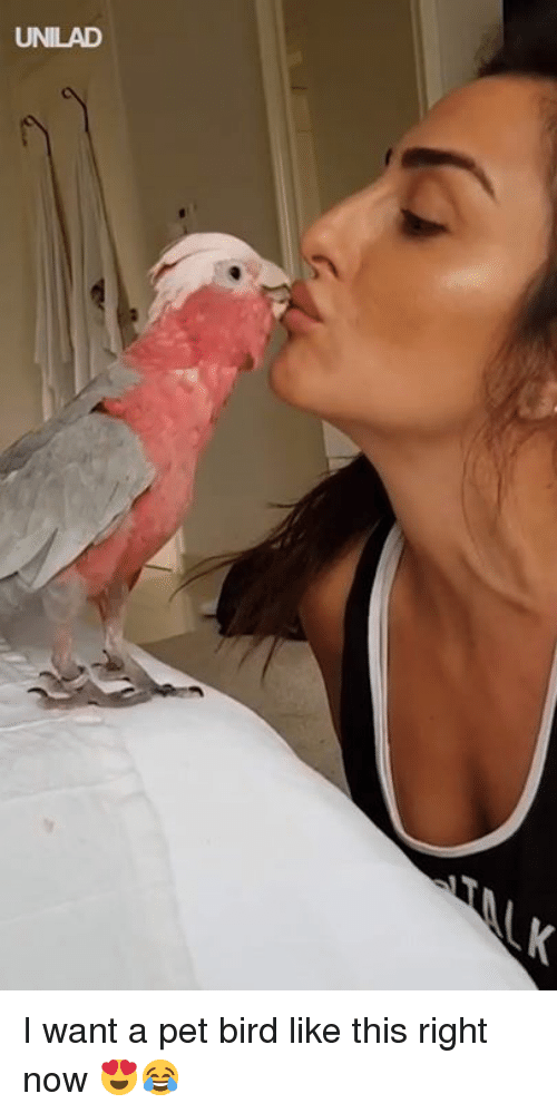 Dank, 🤖, and Pet: UNILAD I want a pet bird like this right now 😍😂