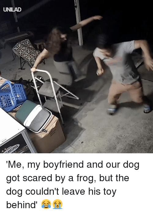 Dank, Boyfriend, and 🤖: UNILAD 'Me, my boyfriend and our dog got scared by a frog, but the dog couldn't leave his toy behind' 😂😭