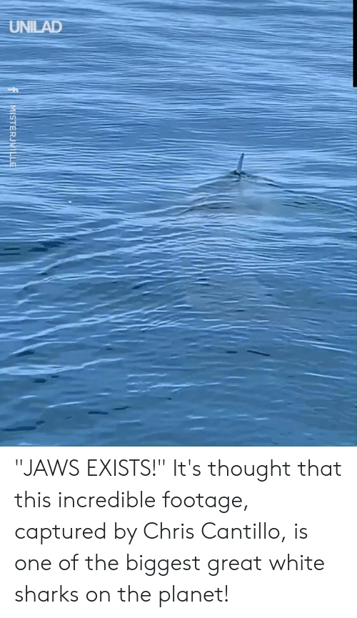 "Dank, Sharks, and White: UNILAD  MISTERJVILLE ""JAWS EXISTS!""  It's thought that this incredible footage, captured by Chris Cantillo, is one of the biggest great white sharks on the planet!"