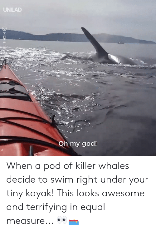 pod: UNILAD  Oh my god! When a pod of killer whales decide to swim right under your tiny kayak! This looks awesome and terrifying in equal measure... 👀🛶
