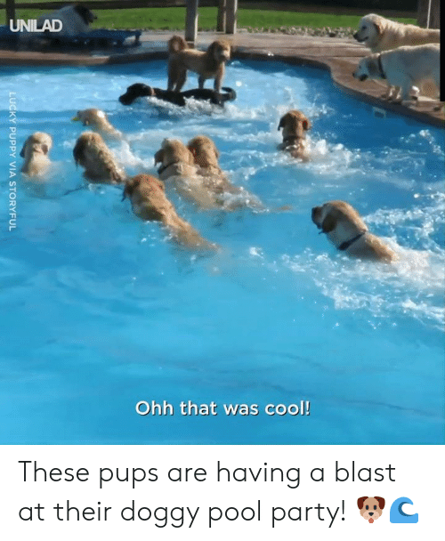 doggy: UNILAD  Ohh that was cool!  LUCKY PUPPY VIA STORYFUL These pups are having a blast at their doggy pool party! 🐶🌊