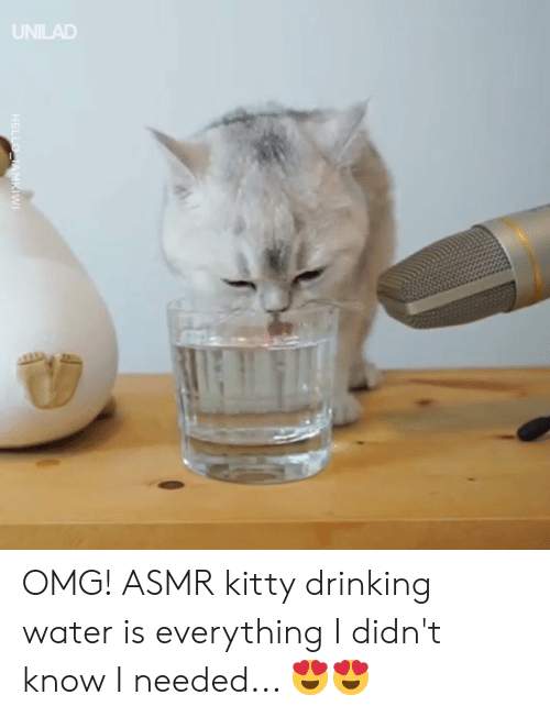 drinking water: UNILAD OMG! ASMR kitty drinking water is everything I didn't know I needed... 😍😍