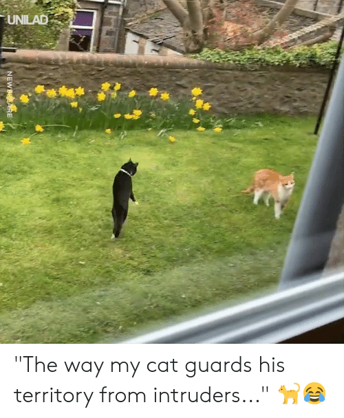 """Dank, 🤖, and Cat: UNILAD """"The way my cat guards his territory from intruders..."""" 🐈😂"""