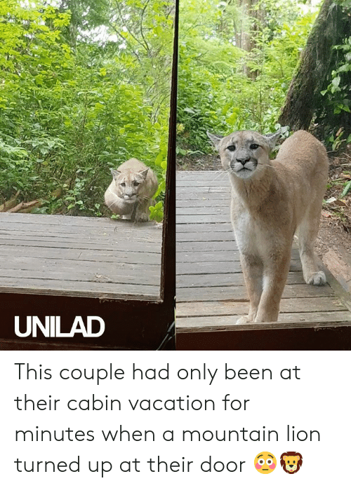 Dank, Lion, and Vacation: UNILAD This couple had only been at their cabin vacation for minutes when a mountain lion turned up at their door 😳🦁
