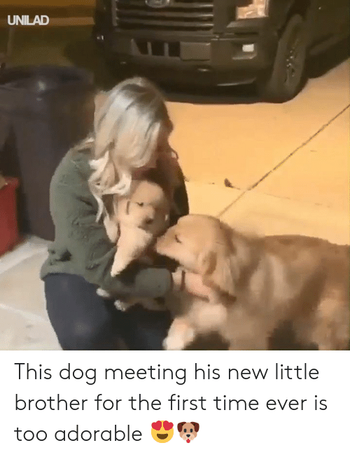 Dank, Time, and Little Brother: UNILAD This dog meeting his new little brother for the first time ever is too adorable 😍🐶