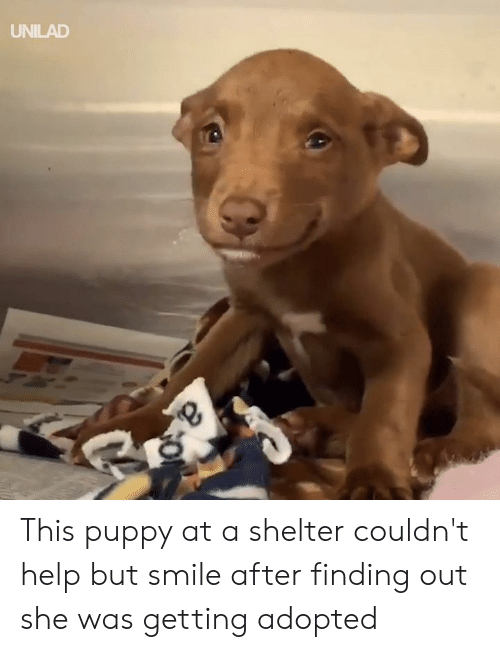 Dank, Help, and Puppy: UNILAD This puppy at a shelter couldn't help but smile after finding out she was getting adopted