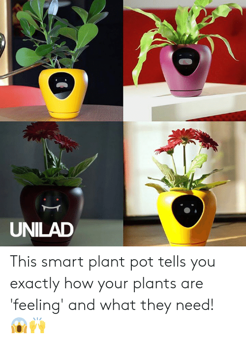 Dank, 🤖, and How: UNILAD This smart plant pot tells you exactly how your plants are 'feeling' and what they need! 😱🙌