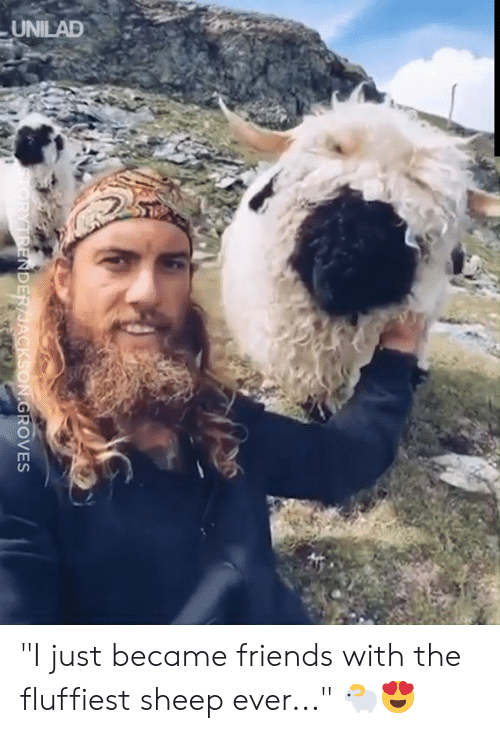 "unilad: UNILAD  TORYTRENDER/JACKSON.GROVES ""I just became friends with the fluffiest sheep ever..."" 🐑😍"