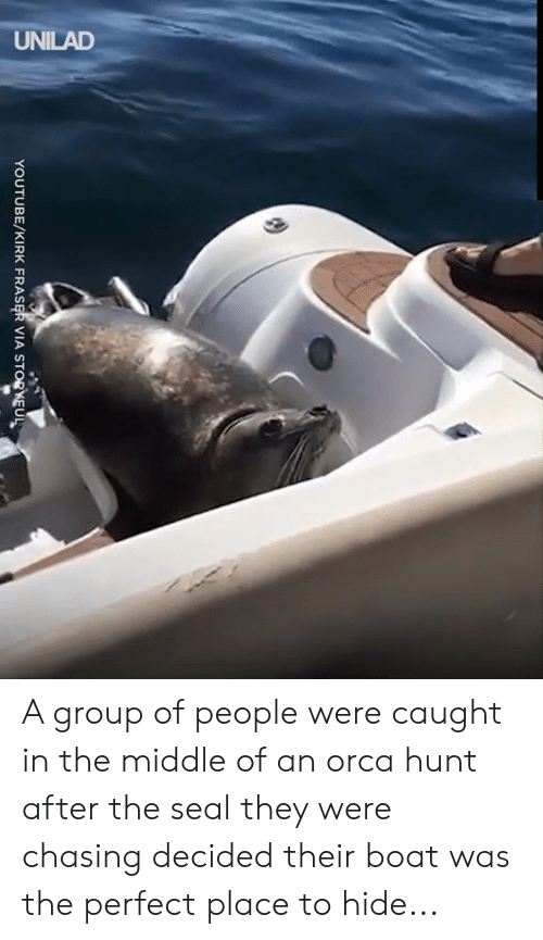 kirk: UNILAD  YOUTUBE/KIRK FRASER VIA STORKEUL A group of people were caught in the middle of an orca hunt after the seal they were chasing decided their boat was the perfect place to hide...