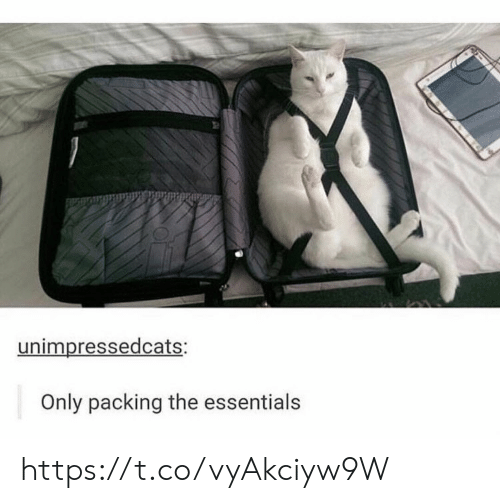 Memes, 🤖, and Essentials: unimpressedcats:  Only packing the essentials https://t.co/vyAkciyw9W