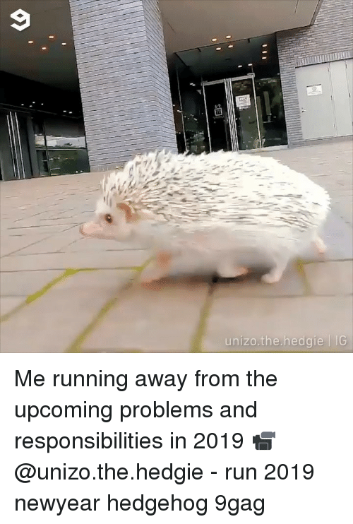 9gag, Memes, and Run: unizo.the.hedgie 11G Me running away from the upcoming problems and responsibilities in 2019 📹 @unizo.the.hedgie - run 2019 newyear hedgehog 9gag