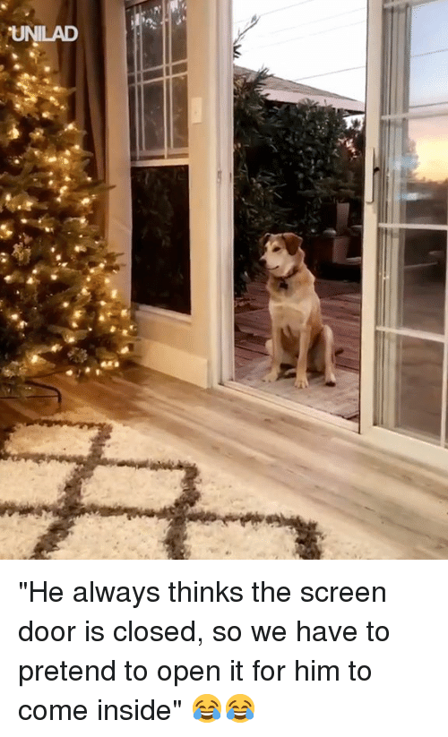 """Dank, 🤖, and Him: UNLAD """"He always thinks the screen door is closed, so we have to pretend to open it for him to come inside"""" 😂😂"""