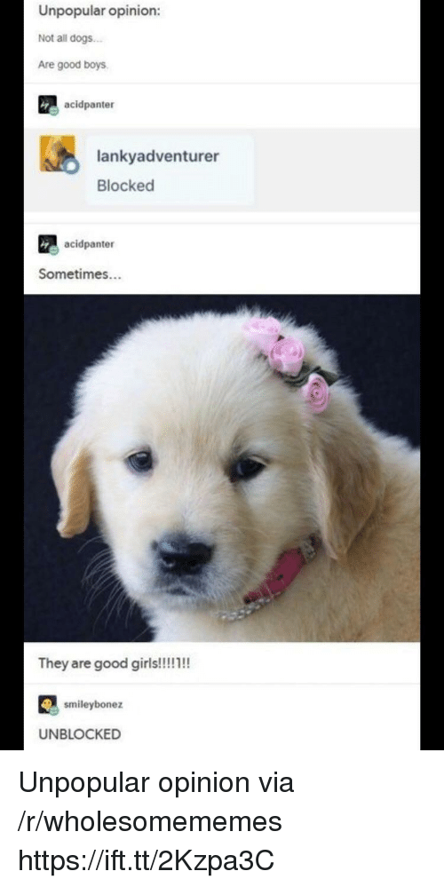 Dogs, Good, and Boys: Unpopular opinion:  Not all dogs  Are good boys  acidpanter  lankyadventurer  Blocked  acidpanter  Sometimes...  ey are good giris  smileybonez  UNBLOCKED Unpopular opinion via /r/wholesomememes https://ift.tt/2Kzpa3C