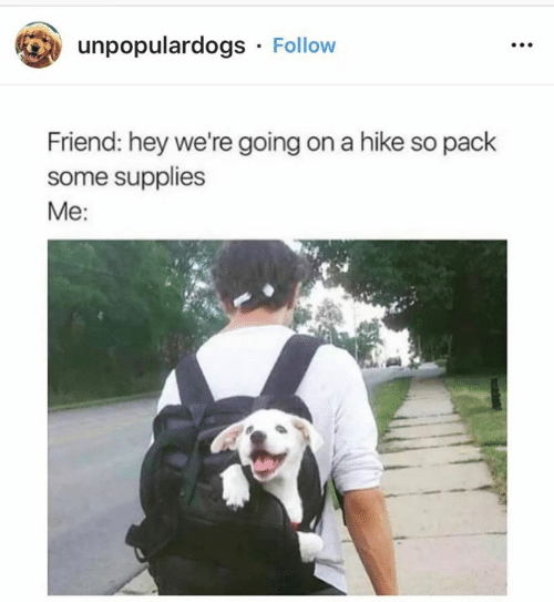 Memes, 🤖, and Friend: unpopulardogs Follow  Friend: hey we're going on a hike so pack  some supplies  Me: