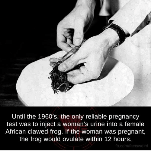 Urin: Until the 1960's, the only reliable pregnancy  test was to inject a woman's urine into a female  African clawed frog. If the woman was pregnant,  the frog would ovulate within 12 hours.  fb.com/facts Weird