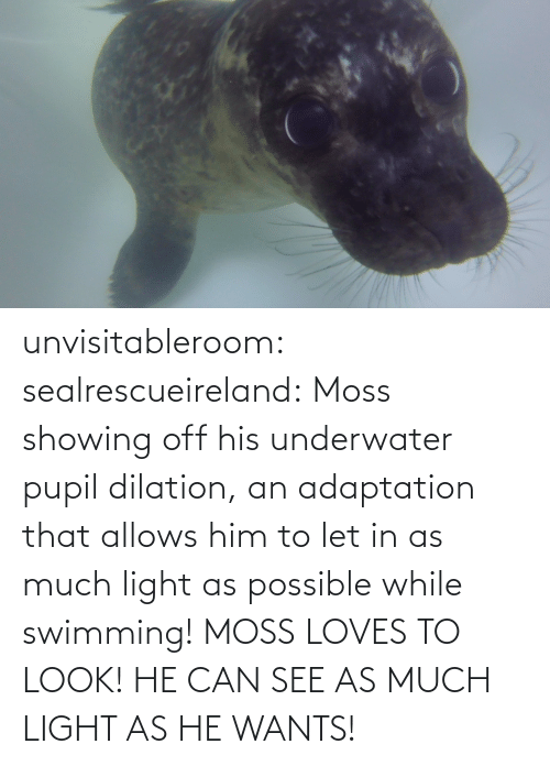 him: unvisitableroom:  sealrescueireland: Moss showing off his underwater pupil dilation, an adaptation that allows him to let in as much light as possible while swimming! MOSS LOVES TO LOOK! HE CAN SEE AS MUCH LIGHT AS HE WANTS!