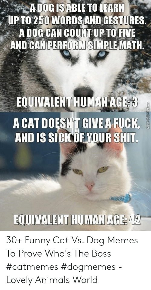 Animals, Funny, and Memes: UP TO 250 WORDSAND GESTURES.  A DOG CAN COUNT UP TO FIVE  AND CANEERFORMSİNIRLE MATH.  EOUIVALENT HUMAN AGE  A CAT DOESN T GIVE A FUCK,  AND IS SICKOF YOUR SHIT  EQUIVALENT HUMAN AGE  42 30+ Funny Cat Vs. Dog Memes To Prove Who's The Boss #catmemes #dogmemes - Lovely Animals World