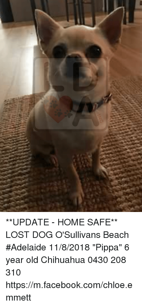 Chihuahua Facebook And Memes Update Home Safe Lost