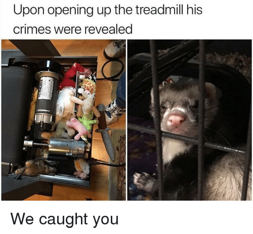 Treadmill: Upon opening up the treadmill his  crimes were revealed We caught you