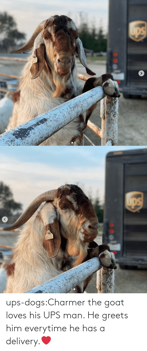 him: ups-dogs:Charmer the goat loves his UPS man. He greets him everytime he has a delivery.❤️