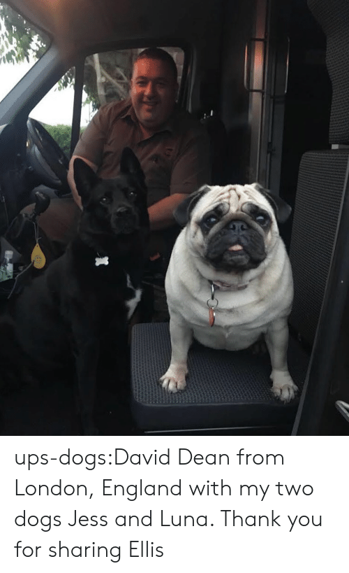 ellis: ups-dogs:David Dean from London, England with my two dogs Jess and Luna. Thank you for sharing Ellis